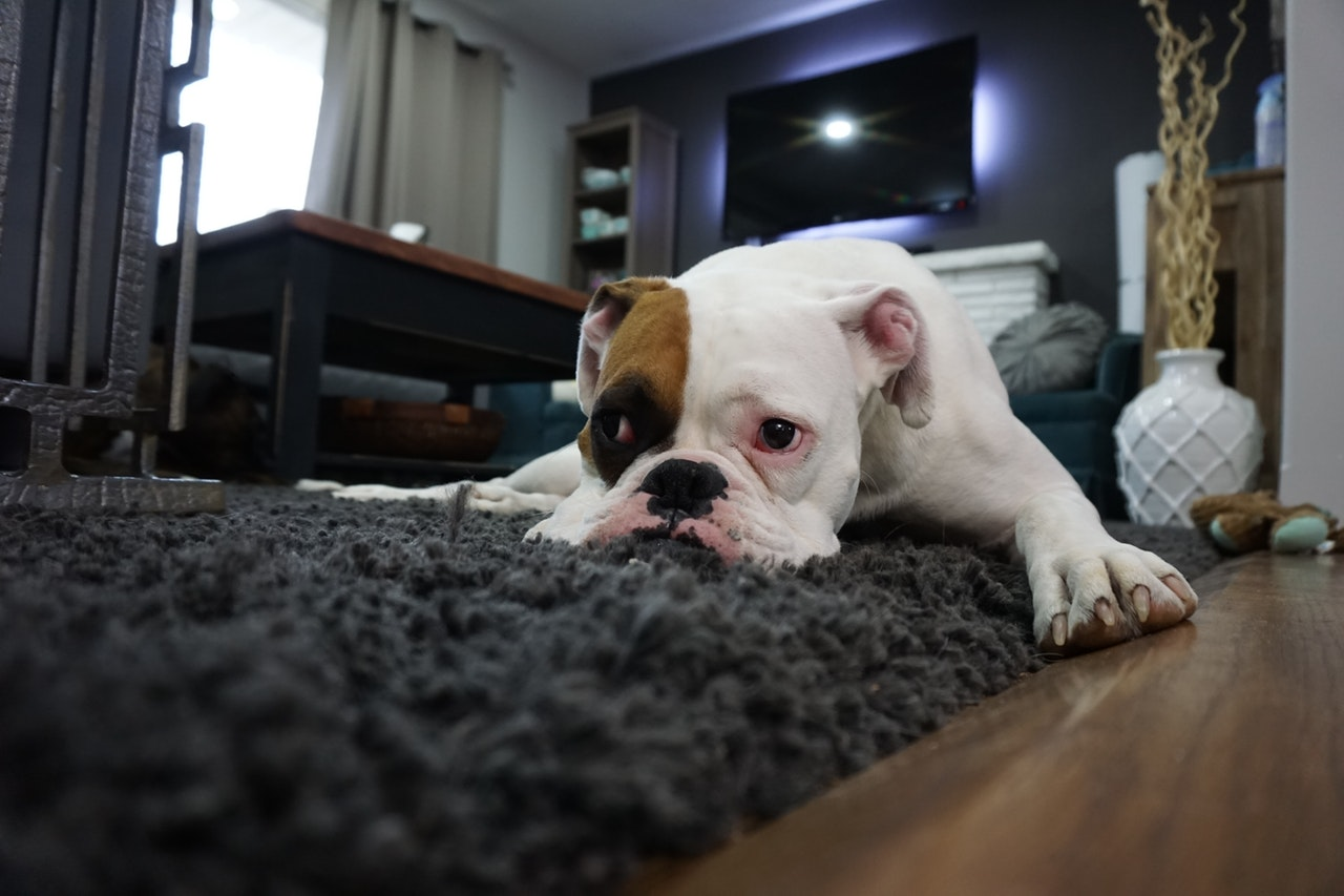 Top 5 Easy Tips to Clean Your Carpet-Refused by Karen